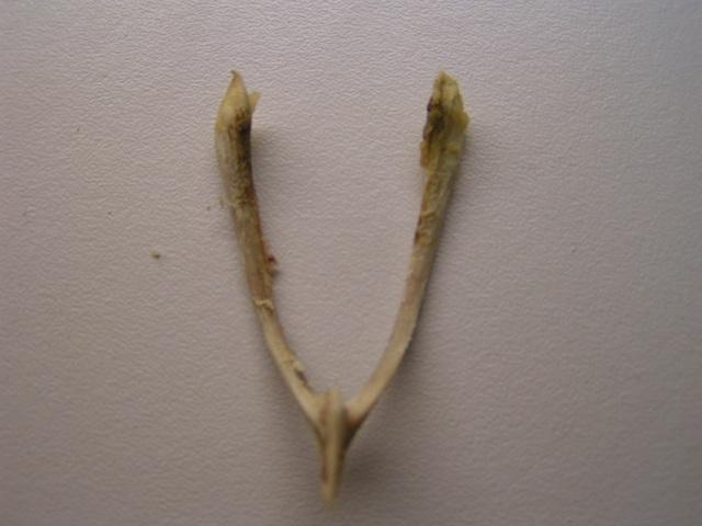 The bone before it broke